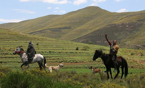 Basotho Pony and Riders (The Equinest; 2015)